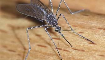 خمسة مسببات لفيروسات خطرة.. متوفرة في لبنان