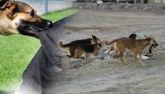 للحيوانات قانون يحميها من القتل... فهل من قانون يحمي البشر منها؟